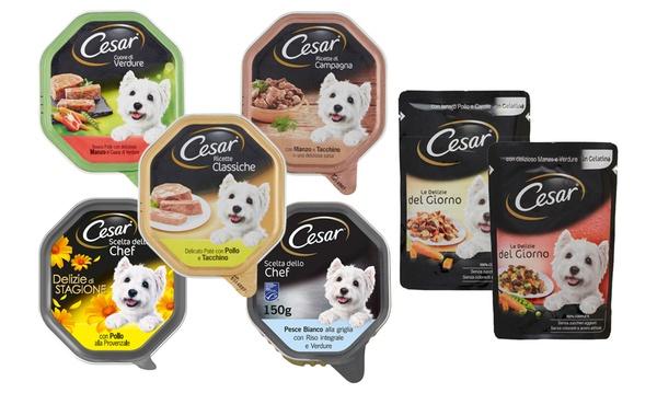 28 confezioni cibo per cani Cesar in vari gusti